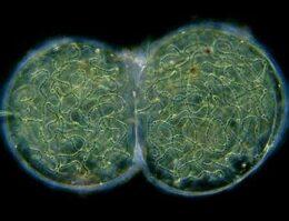 http://mywordsforhim.com/a-god-hug/skeptics-reason/scientific-fields/biology/
